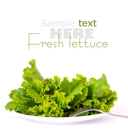 Lettuce on a white plate photo