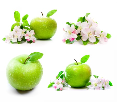 green apple fruit with spring pink flowers on branch photo