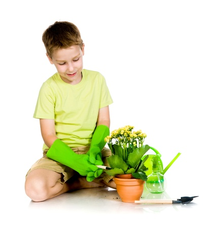 cute boy transplanted the plant  white background photo