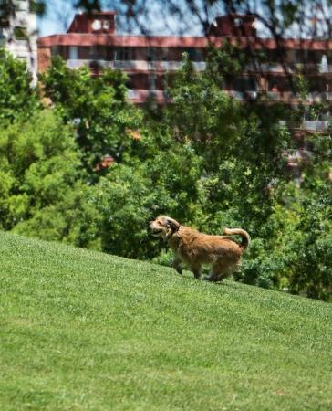 dog days: perro activo en el césped en un día de verano