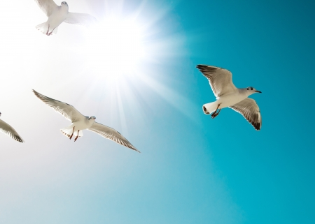 seagulls are flying against the beach Foto de archivo