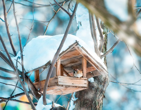 sparrow sitting in a manger in winter