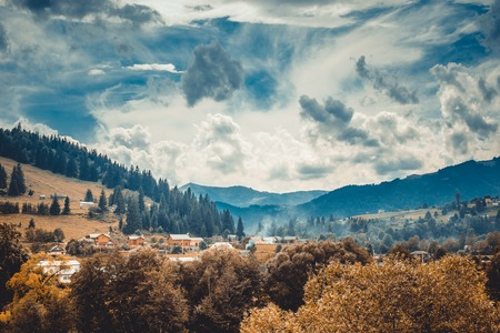 trees photography: Beautiful autumn landscape in mountains Karpaty in the forest.