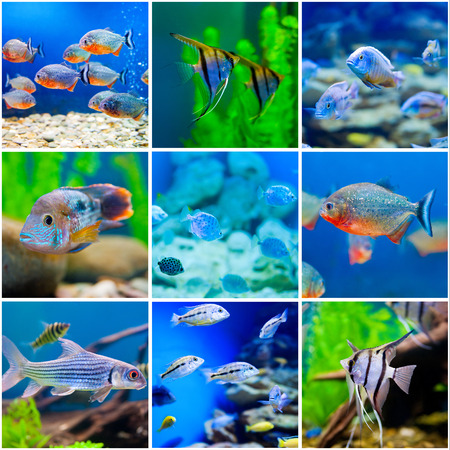 aquarian fish: collection  photos from  saltwater world in aquarium Stock Photo