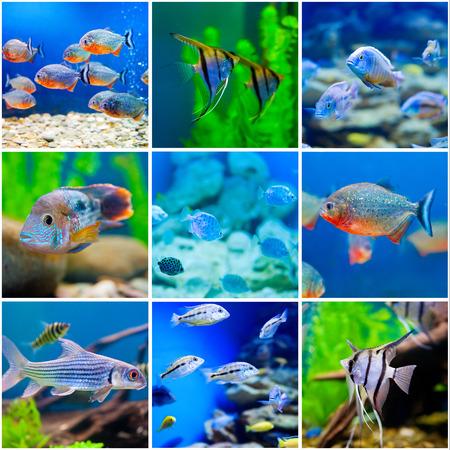 collection  photos from  saltwater world in aquarium Standard-Bild