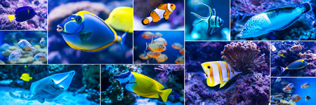 exoticism saltwater fish: Collage of photos colorful fish in aquarium saltwater world Stock Photo