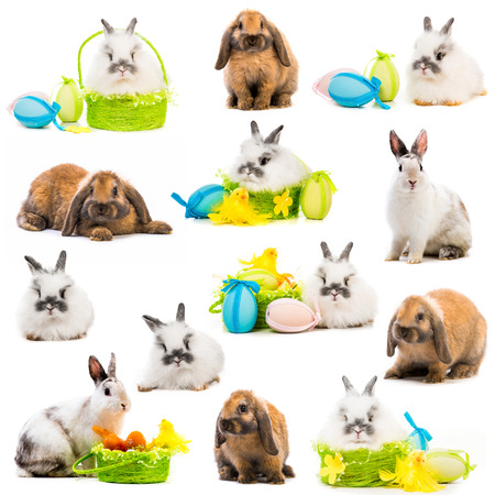 lop eared: photo collage rabbits Easter eggs in a basket on a white background Stock Photo