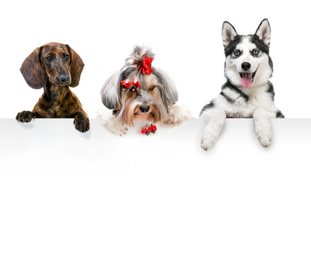 portraits of different breeds of dogs for the white banner Foto de archivo
