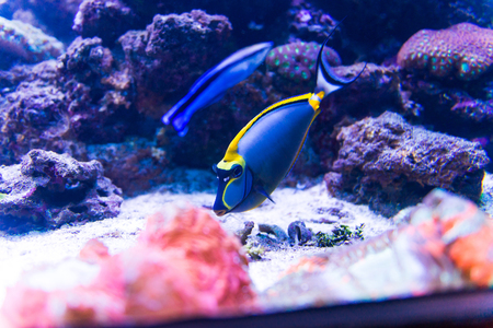 non urban scene: Colorful fish in aquarium saltwater world