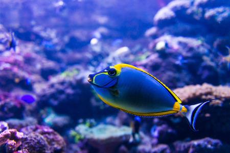 aquarium hobby: Colorful fish in aquarium saltwater world