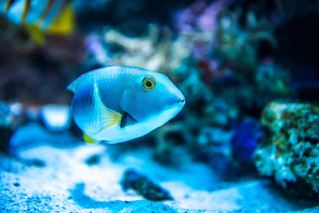aquarian fish: Colorful fish in aquarium saltwater world
