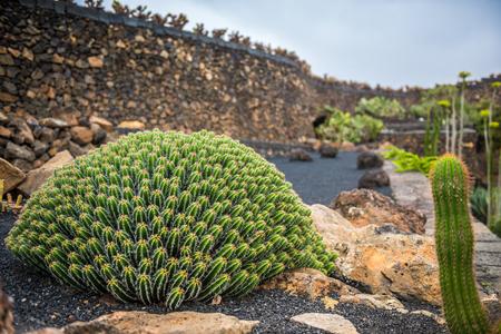view of cactus garden jardin de cactus in guatiza lanzarote canary islands - Jardn De Cactus