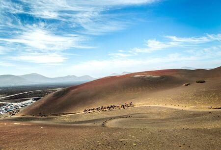 timanfaya: Caravan of camels in the desert on Lanzarote in the Canary Islands. Spain