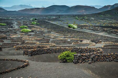 lanzarote: Vineyards in La Geria on Lanzarote. Canary Islands, Spain