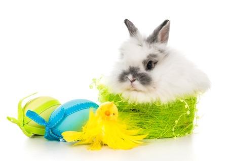 huevos de pascua: fotos de Pascua - conejo con huevos de colores