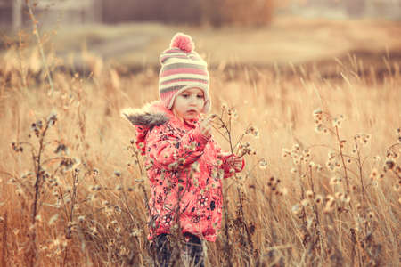 field sunset: cute little girl in a field in fall at sunset