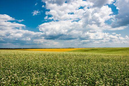 Champ jaune-vert sous les beaux nuages