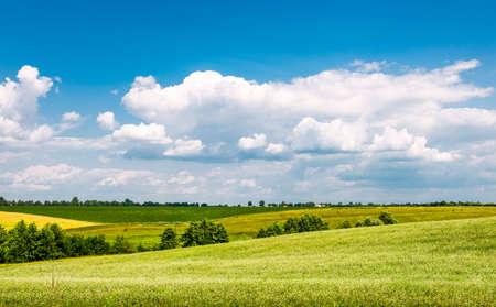 champ de fleurs: Champ jaune-vert sous les beaux nuages Banque d'images