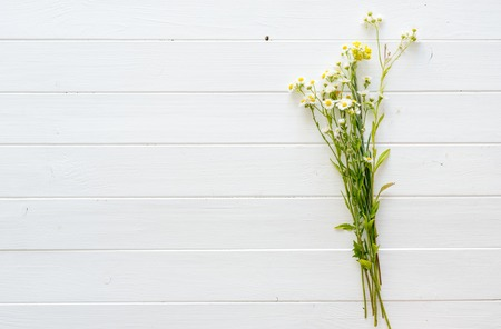 chamomilla: Daisy chamomile flowers on wooden table