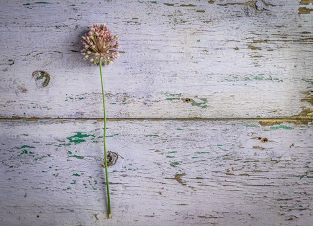 flower on table with weathered coating, topview, copyspace