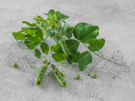 Green peas in shells, home farming 版權商用圖片