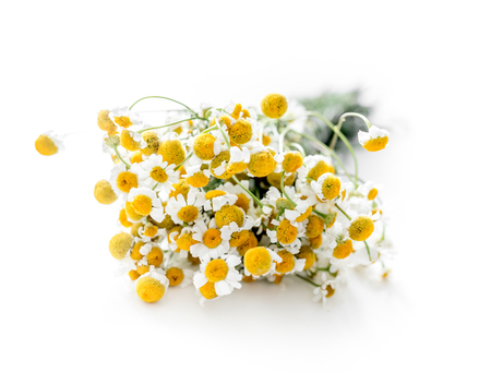 Dried branch of chamomile drug