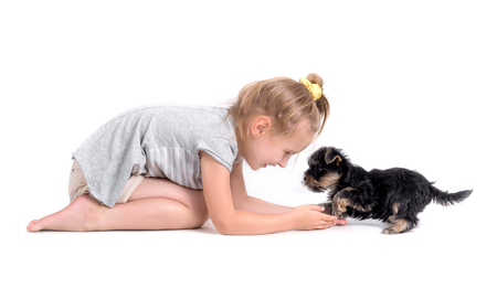 puppy york and little girl Stock Photo - 88800086