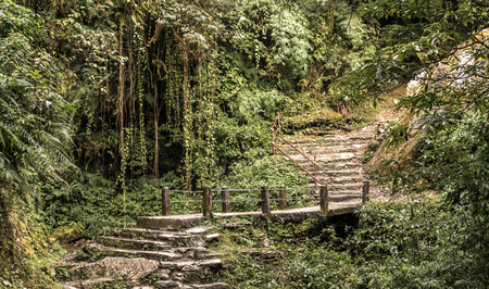 Path in forest. Annapurna circuit, Nepal.