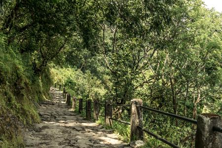 Forest trekking path, Annapurna circuit, Nepal