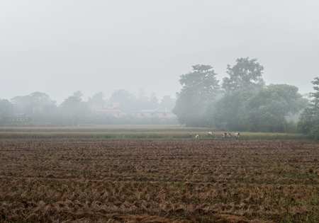 People harvesting rice in Nepal.