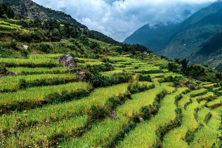 Green valley with rice terraces, Annapurna circuit, Nepal. Stock Photo