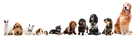 Collage of pets isolated on white background Stock Photo