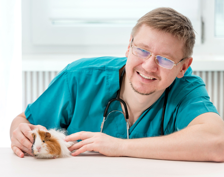 Handsome veterinarian in glasses examining guinea pig at table