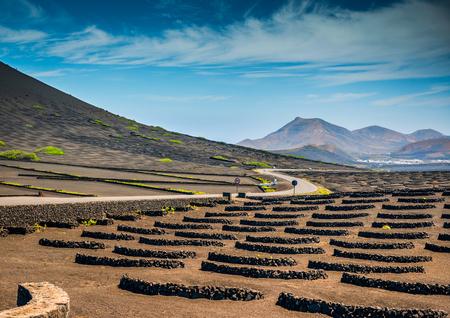 Vineyards in La Geria,