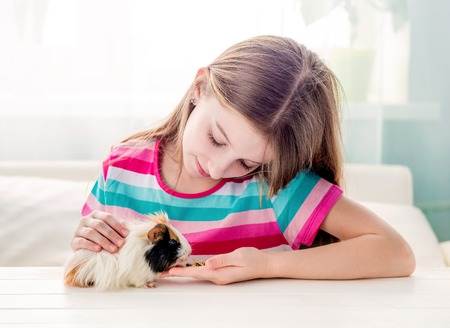 Girl stroking fluffy guinea pig