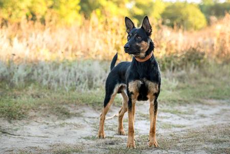 non-pedigree dog on the grass Фото со стока