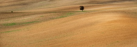 Lonely tree on spacious Moravian czech fied Stok Fotoğraf
