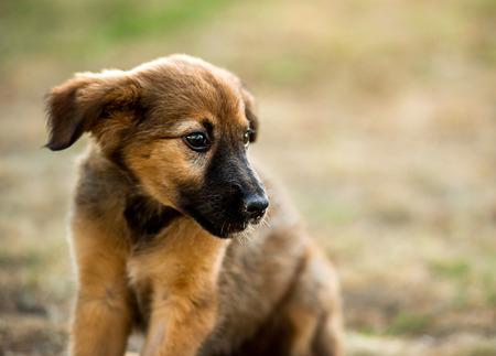 mongrel puppy sitting on grass