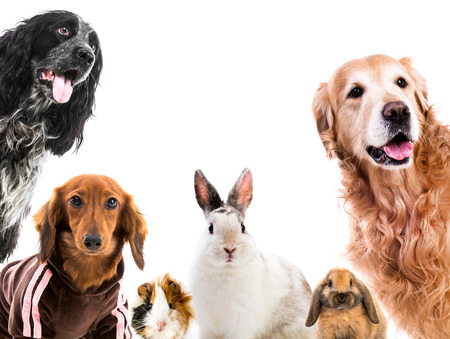 Group of cute fluffy animals looking on camera isolated on white background Stock Photo