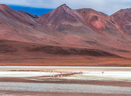 Scenery of flamingos on the lagoon of Bolivian mountains