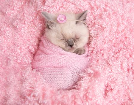 Newborn British kitten sleeps on pink fur