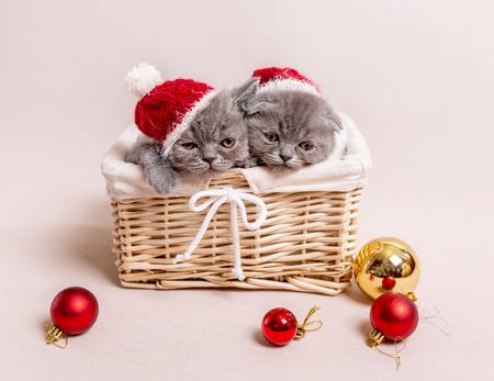 Gray kittens in basket