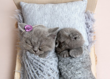 Gray kittens sleeping in small bed