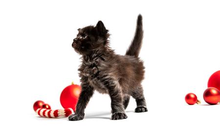 Small dark kitten isolated