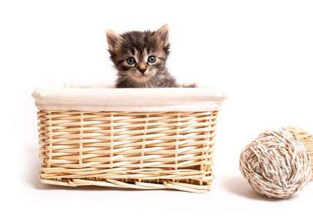 fluffy kitten in a basket isolated on white background