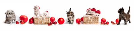 Set of kittens with new year decorations Stock Photo