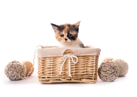Furry kitten in basket isolated Stock Photo