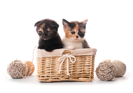 Two cute kittens in basket isolated