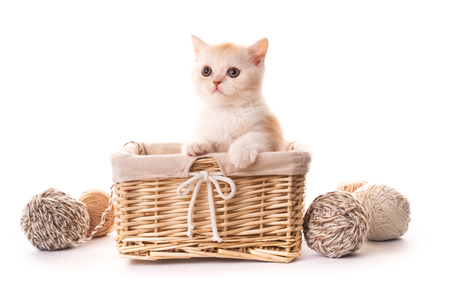 Cute white kitten in basket isolated