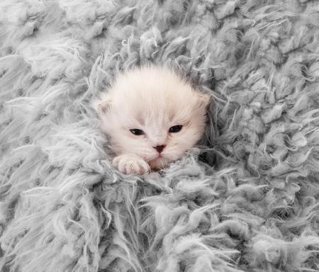 Little newborn white kitten